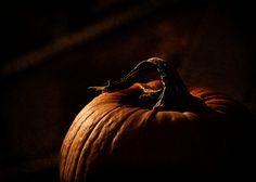 Love the dramatic lighting. Dark Autumn, Autumn Day, Autumn Leaves, Fall Halloween, Happy Halloween, Halloween Ideas, Laika Studios, October Country, Sweet November