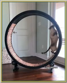 Cute Cats And Kittens, Cool Cats, Cute Baby Animals, Funny Animals, Funny Cats, Grumpy Cats, Cage Chat, Cat Exercise Wheel, Cat House Diy