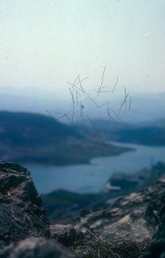 andy goldsworthy   sticks in cobweb