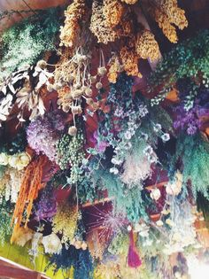 soft hanging plants & flower
