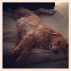 Cooper loves his new L.L.Bean dog bed.  Photo via Kait B.