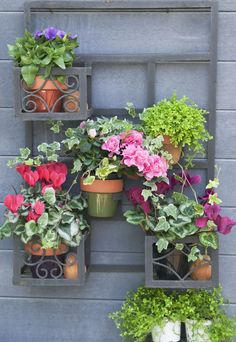 Gardening for beginners: Charlie Dimmock's top 5 tips  - housebeautiful.co.uk