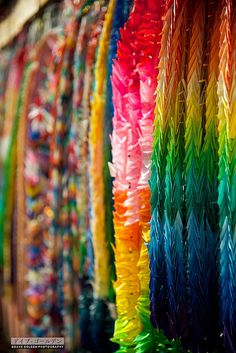 I'd love to fold 1000 origami cranes.. and find a creative way to display them!
