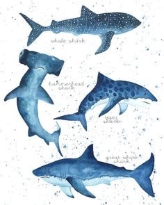 Whale Shark, Great White Shark, Hammerhead Shark, Tiger Shark. ♥ All artwork copyrighted © by Kayla Conyer.