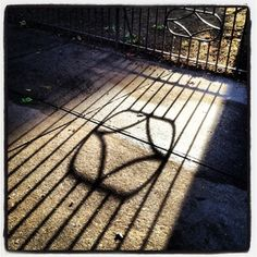 Morning light pours through an iron fence.