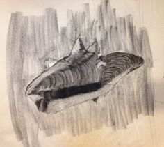 WCSU Drawing II. Shell with dominant hand (right).