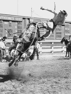 Rocky Rockabar off ol' Snort—Calgary Stampede 1967 Rodeo Cowboys, Real Cowboys, Cowboy Ranch, Cowboy And Cowgirl, Cowgirl Pictures, Cowboy Photography, Pro Rodeo, Western Photo, Rodeo Life