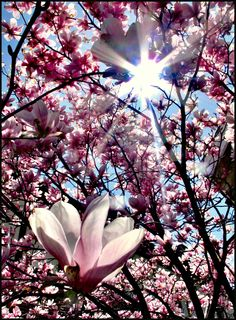 Sunshine and Magnolia Blossoms: One of the best natural remedies for the blues!