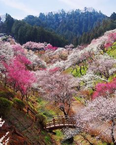Beautiful gardens at Yoshino-Baigo, Ome, Japan  (by Seima)