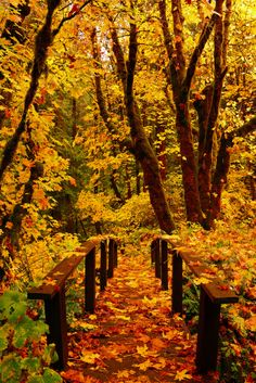 Autumn ~ This little foot bridge begins a short hike to the Toketee Falls in Oregon - photo: kismetphotos