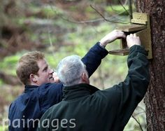 Prince Harry in Frankham Woods today