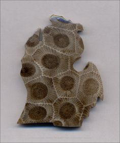 (please click image for full view) Title: Michigan Petoskey Stone Image: Created by Aaron J. Greenblatt using an Epson Perfection 1200U scanner. Editing: Edited in PhotoShop 7.0 for color accuracy,...