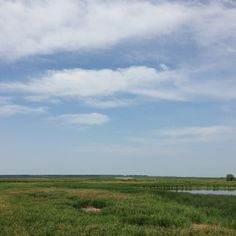07/28 Delta Marsh