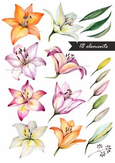 Lilly Flower Drawing, Lilly Flower Tattoo, Tropical Flower Tattoos, Lilly Tattoo Design, Lilies Drawing, Floral Drawing, Flower Tattoo Designs, Flower Art, Tiger Lily Tattoos