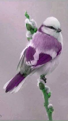 "First a green bird and now a purple bird. Are these birds real. ""I Hope So"""