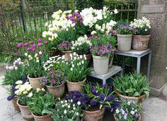 Flower pot arrangement at Claus Dalby's garden