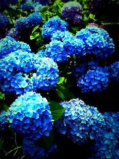 Cute Blue Flowers #flowers, #nature, #bestofpinterest, https://facebook.com/apps/application.php?id=106186096099420