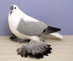 Pigeons have excellent hearing abilities. They can detect sounds at far lower frequencies than humans are able to, and can thus hear distant storms and volcanoes. Despite the social perception as dirty and disease-ridden, pigeons are actually very clean animals and there is very little evidence to suggest that they are significant transmitters of disease.