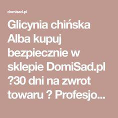 Glicynia chińska Alba kupuj bezpiecznie w sklepie DomiSad.pl ✔30 dni na zwrot towaru ✔ Profesjonalne pakowanie ✔ Wygodne sposoby płatności. Wisteria