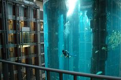 The AquaDom in the Radisson Blu Hotel Berlin, Germany. There's a glass enclosed elevator through the center of the tank!