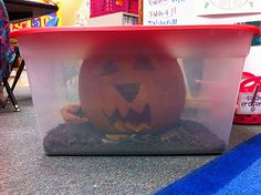 watch a pumpkin decompose and write about in our science journal