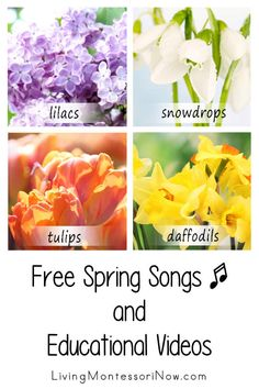 Lots of free spring educational videos and a list of spring-themed free song and rhyme posts. Spring resources for a variety of ages - Living Montessori Now Preschool At Home, Preschool Themes, Montessori Activities, Preschool Kindergarten, Homeschooling Resources, Curriculum, Circle Time Activities, Spring Activities, Character Education Videos