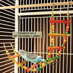 Diy bendable bird ladder