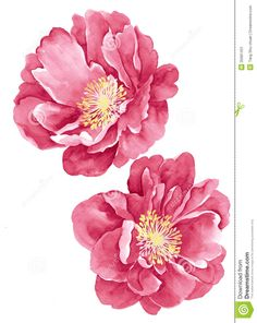 how to paint a watercolor rose - Google Search