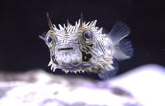 Coral Haven   Saltwater Fish, Corals, & Aquarium Supplies   Bettendorf