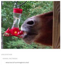 When this hummingbird was thirsty. | 27 Times Tumblr Was Wholesome And Pure