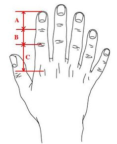 The Golden Ratio, the fibonacci sequence, and the human body.  STEM activities for math, measurement, and number sequences.