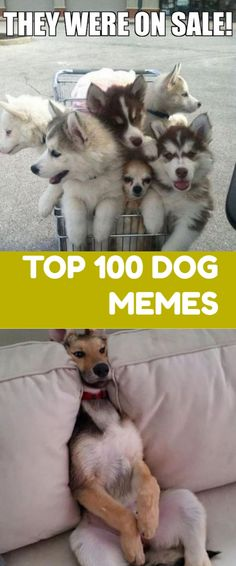 Dog Memes monday Do you love Dogs? Well you will surely enjoy these super hilarious latest funny memes about dogs, make sure to share th. Humor Videos, Memes Humor, Kid Memes, Funny Humor, Hilarious Memes, Funny Sarcastic, Jokes, Gym Humor, Funny Babies