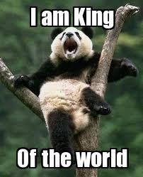 king of the world panda Meme | Slapcaption.com