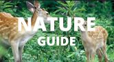 Best of Hokkaido Nature Guide: expert rankings + stories, red-crowned cranes, Yezo brown bears, wildlife, drift ice, breathtaking sights, onsen hot springs... Admire then plan your trip to Japan!