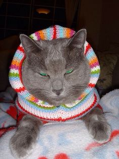 Gray cat with green eyes in hooded sweater Funny Cats, Funny Animals, Hipster Cat, Cat Sweaters, Cat Hat, Grey Cats, Green Eyes, Kittens, Beanie
