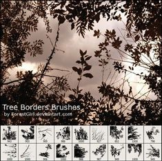 pinceles copas arboles - tree - photosop - brushes