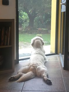 Observing the world outside. And I'd say this dog's hips must be quite healthy. Such a pose. Cute Funny Animals, Funny Animal Pictures, Cute Baby Animals, Funny Dogs, Animals And Pets, Beautiful Dogs, Animals Beautiful, Cute Puppies, Dogs And Puppies