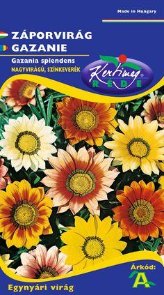 Egynyári virágok : Záporvirág Plants, Plant, Planets