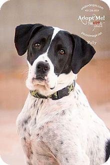 Brittany Dog Rescue Ohio