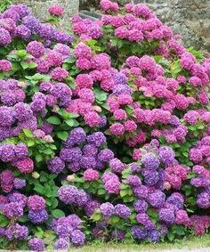 Mycket vackra blommor