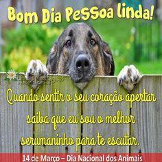 Lindos Vídeos Lindas Mensagens: Dia Nacional dos Animais - 14 de Março