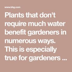 Plants that don't require much water benefit gardeners in numerous ways. This is especially true for gardeners who live in areas with watering restrictions and those who travel frequently. Regardless of your reason, choosing perennial groundcovers that don't need a lot of care (or water) are a great way to have a low-maintenance garden. Consider adding these tough and non-thirsty beauties to your landscape.