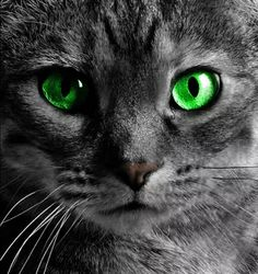 Amazing Cats Of RoseClan