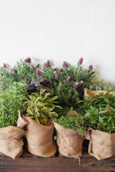 pots arranging idea / burlap wraps