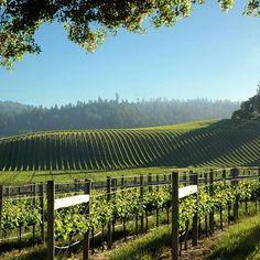 Six Great American Wine Country Harvest Getaways Great Places, Beautiful Places, Top Destination Weddings, Winery Tasting Room, Mendocino County, Wine Vineyards, Wine Sale, Visit California, Northern California