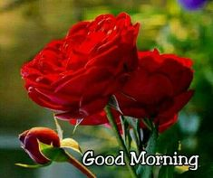 Good morning to you. Good Morning Roses, Happy Morning, Good Morning Messages, Good Morning Good Night, Morning Wish, Happy Sunday, Good Morning Beautiful Pictures, Good Night I Love You, Good Morning Images Flowers