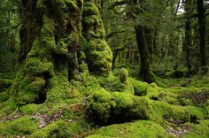 Deep Heart Forest, sacred ground to all woodland beings ( near the River house!)