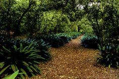 Beautiful Garden Walk to the Descanso Gallery