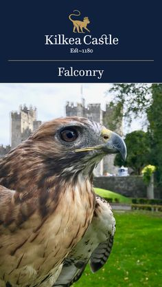 A noble and ancient sport, falconry offers a unique and memorable experience.