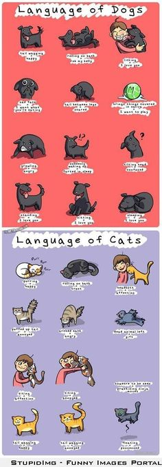 Language of dogs and cats.